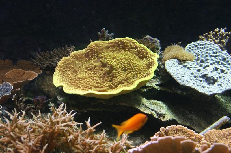 aquarium d'Amnéville Turbi